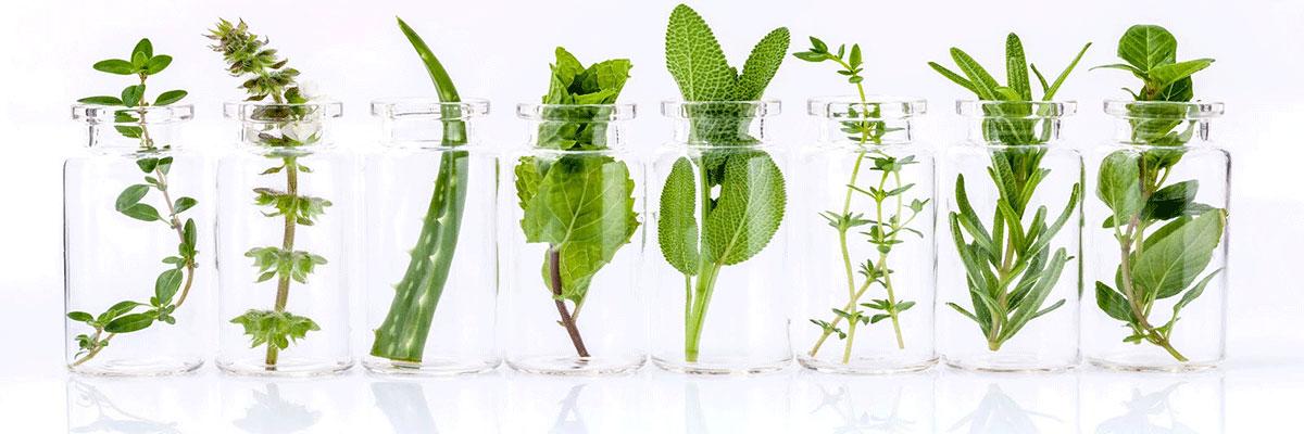 علاج الهبات الساخنة بالأعشاب
